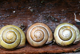 snail composition poster