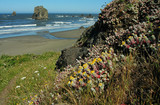 coast trail wildflowers poster