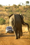 elephant anger poster