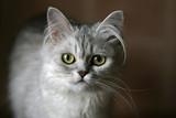 portrait of a kitten poster
