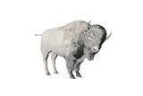 bison pencil sketch poster