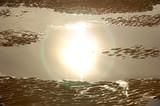 reflet du soleil dans une mare poster