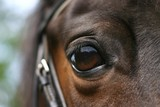 horse eye - Fine Art prints