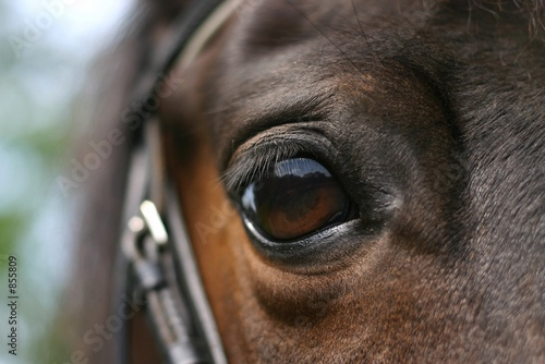 Plexiglas Paardensport horse eye