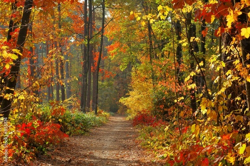 AluDibond Wald colors of fall
