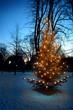 weihnachtsbaum 2