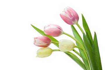bouquet tulip