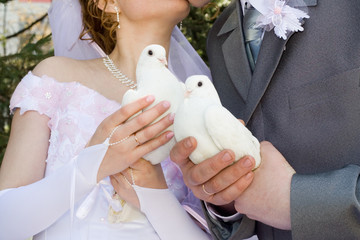 the newlyweds and dove