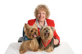 yorkie twins & owner poster