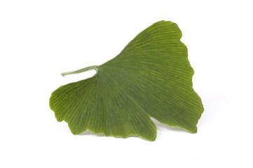 ginkobiloba leaf