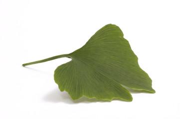 ginko leaf. chinese. tea
