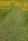 pathway through the buttercups poster