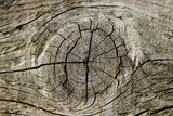 pine wood knot poster