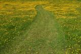 buttercup walkway poster