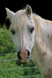 friendly pony poster