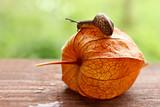 strolling snail speed poster