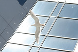 sea gull flying outside of a office building poster
