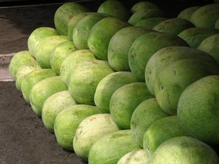 huge watermelons
