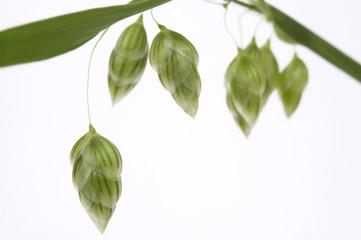 green grass. plant