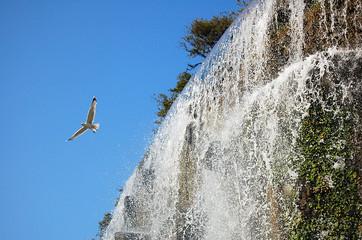 cascade et mouette