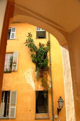 plante murale