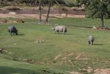 rhinocerous,rhino,antelope,wild,mammal,animal,natu poster