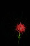 fireworks - red flower poster