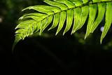fern in shadows. poster