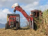 cane harvest poster