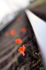 reds railroad