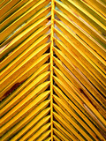 coconut  leaves    4 poster
