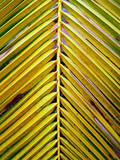 coconut  leaves      6 poster