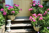 front steps with geraniums poster