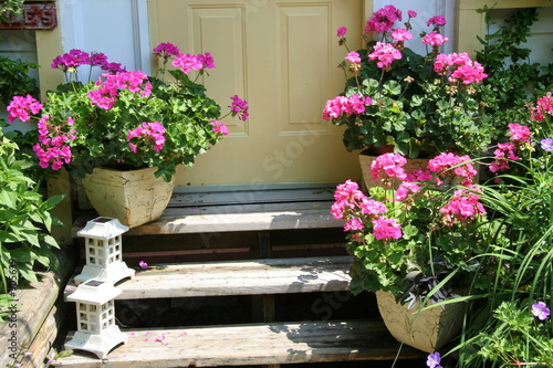 front steps with geraniums