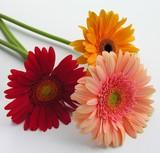 three nice flowers poster