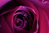 passion - 908663