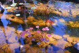 goldfish lily pond poster