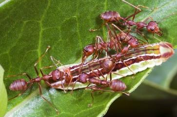 ants team work