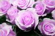 Quadro rosen