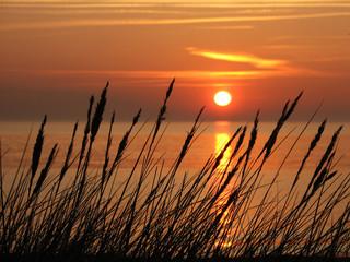 gräser am strand © Carina Hansen
