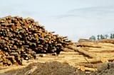lumber processing 1 poster