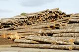 lumber processing 5 poster