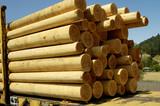 wood poles 2 poster