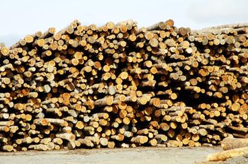 lumber processing 2