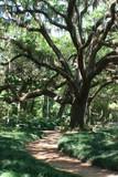 walkway in the oaks poster