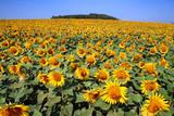 Fototapeta Kwiaty zielony żółty niebieski