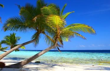 phenomenal beach with palm trees and bird