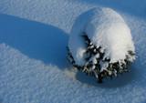 ornamental fir tree under the snow poster