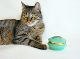 dark grey streaked cat and a green box poster