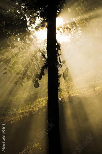 poster of light tree - sun rays